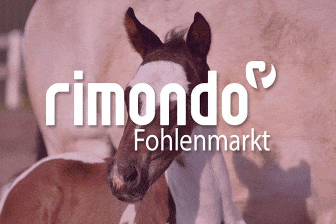 Verkaufsfohlen findest du im rimondo Fohlenmarkt